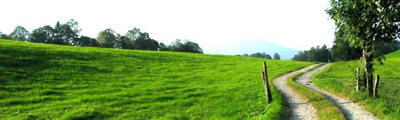 Väg genom fält