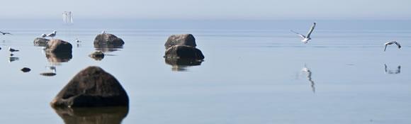 Måsar vid stenar